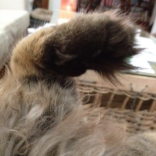 Maggie has very furry toes on the pads of her paws. | by Christine ™