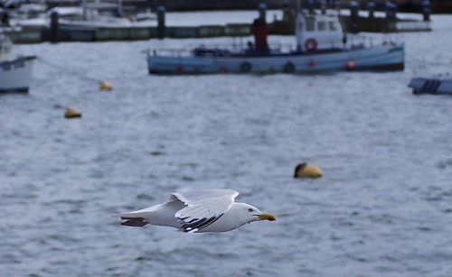 Gull Motion Shot | by Smirfman