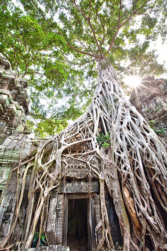 ta prohm, Ang Kor Wat, Siam Reap, Cambodia | by Lisa Bettany {Mostly Lisa}