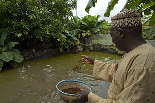 Fish farming | by World Bank Photo Collection