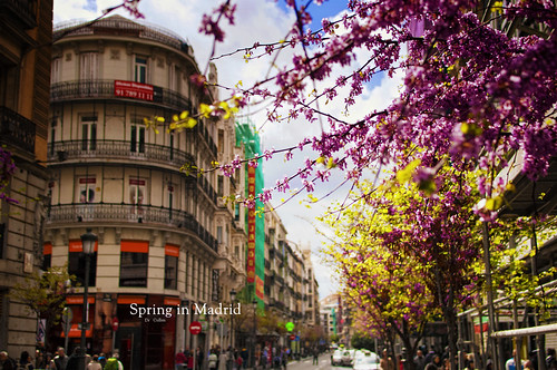 Spring in Madrid | by Dr Cullen