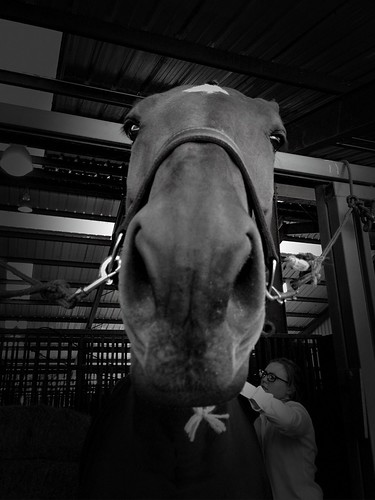 309/365 Unhappy Horse | by carterse