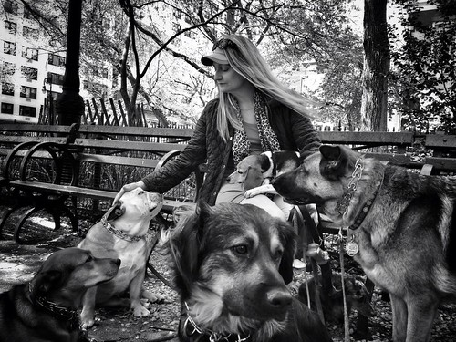 """The Dog Whisperer"" 