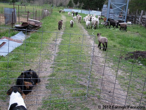 4-20-12 Friday Farm Fix 15 | by Farmgirl Susan