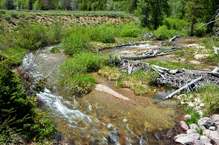 Flowing Creek In Grand Teton National Park | by Austin H.