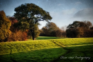 Cheshire Afternoon | by Oliver Wood Photography