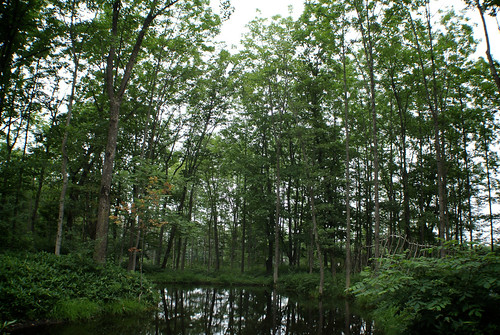 Swampy forested area.