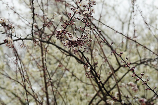 On The Plum Branches | by julianna smith
