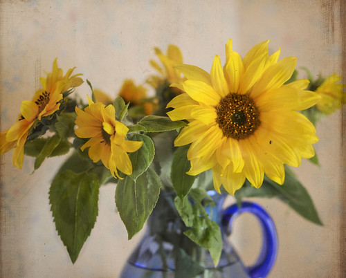 sunflowers | by gunnel´s