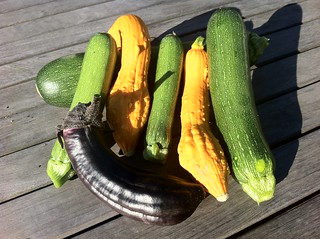 Morning harvest: zuchinni, squash, and eggplant. | by kentbrew