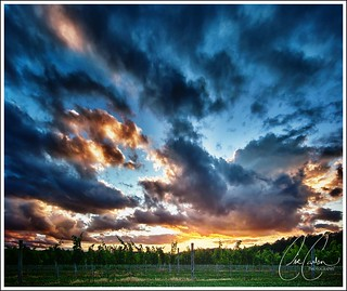 Williamsburg Winery Vineyards Sunset - June 14, 2012 | by carlsonee