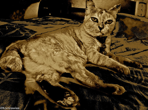 Gato in Sepia Impression... | by Soleil is me.