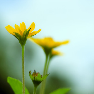 Lovely Wildflowers [ EXPLORED ] | by -clicking-