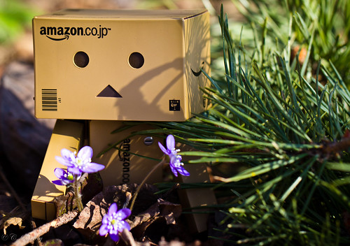 Danbo picking flowers | by CecilieSonstebyPhotography