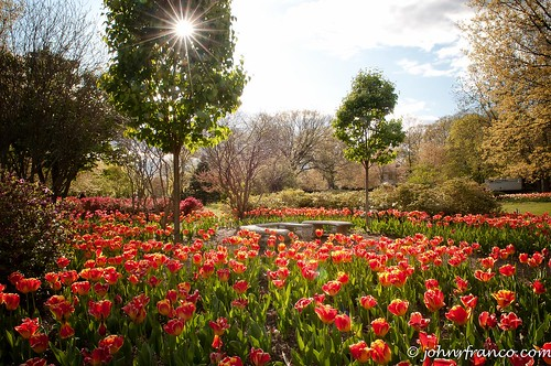 Sherwood Gardens Field Of Dreams | by Fine Photographic Images by John Franco