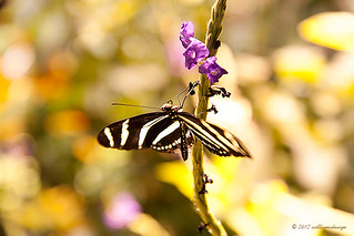 Smithsonian Butterfly Exhibit | by Back*2*Black