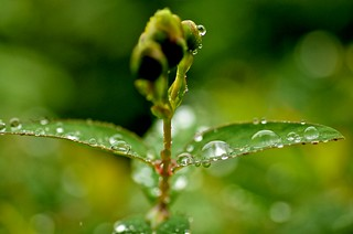 A drop shines. | by tez-guitar