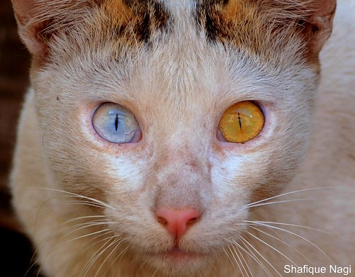 EYE (CAT)CHING...!!! | by kiki nagi