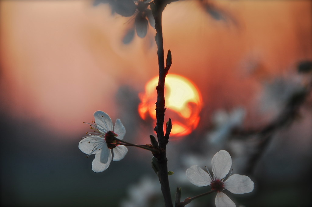 A Spring Sunset