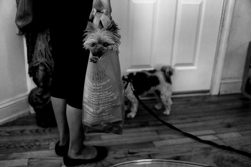 Dog in Bag | by Matt.Dunn