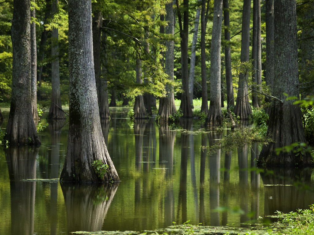 Plum bayou plum bayou located near the small town of engl flickr plum bayou by cormack13 plum bayou by cormack13 freerunsca Gallery