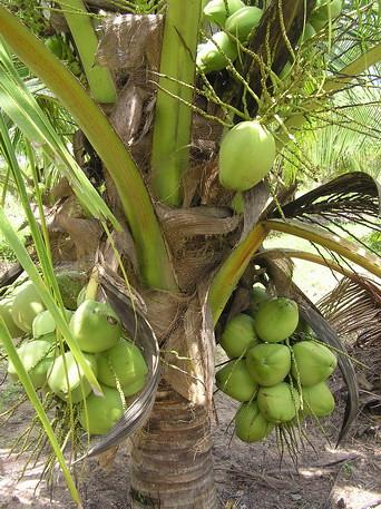 Coconut Cay New Homes Miami