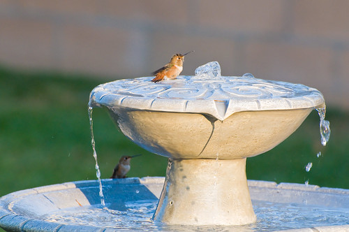 August 4 Hummingbird Bath | by juliaclark42