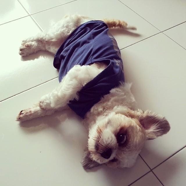 Say Hi To Xmas Morning Goodmorning Puppy Dog Dog Flickr