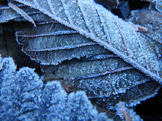 Frost | by red alder ranch