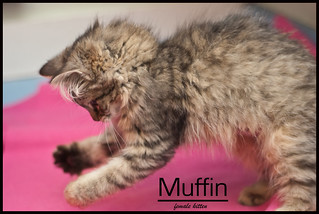 Muffin The Rescue Dog Gma