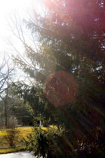 2/5/12 E is for Evergreen | by rayfamilyfarm