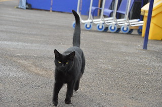 Another station cat- Ninja Cat of Northallerton | by HSTBOSS