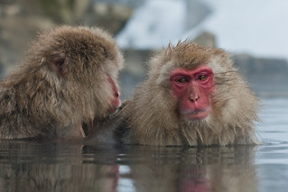 Snow Monkey-ing | by SF Brit