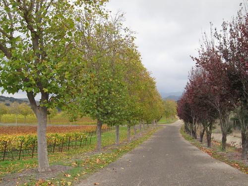 Santa Ynez Vineyard Tours