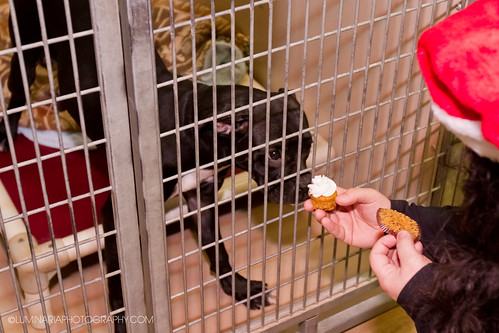 Christmas Dog Treat Ideas