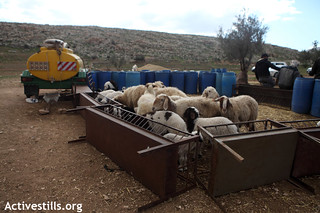 Demolition in Khirbet Humsa, Jordan Valley, 12.01.2012 | by Activestills