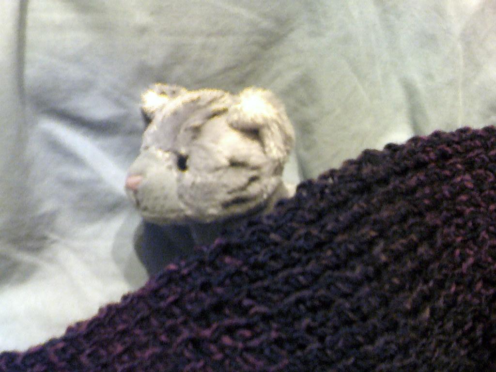 Soft Kitty Warm Kitty Little Ball Of Fur Kat1789 Flickr