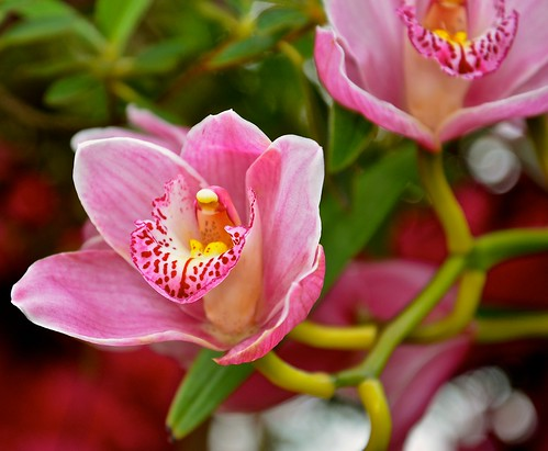 Beautiful Pink Orchids Explore 14 107 Lincoln Park