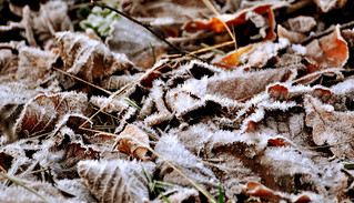 frosty leaves | by Mr.Aros