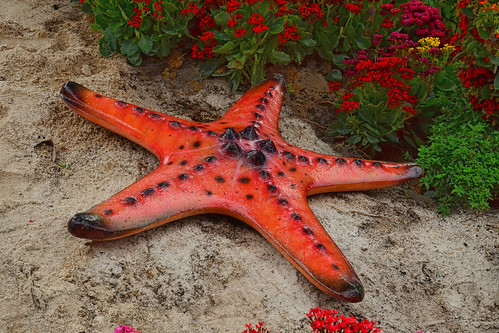 Starfish | by chooyutshing