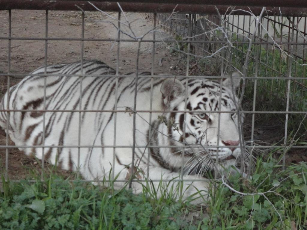 IEAS 031 | International Exotic Animal Sanctuary, Boyd Texas