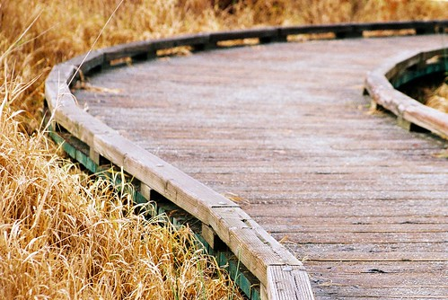 Mercer Slough Boardwalk | by KurtClark