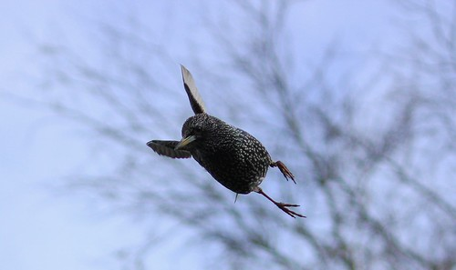 Starling Landing | by aaron_eos_photography