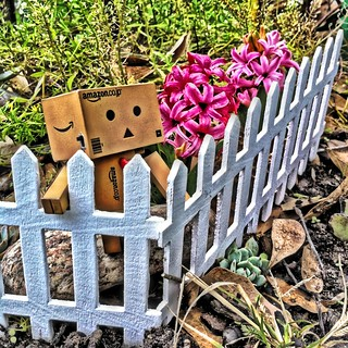 TGI~feNce~FriDaY~~ | by sherrYgibsoN~here & there...