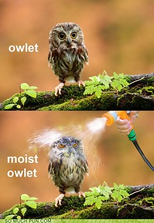 Moist Owlet | by Alex Thomson13