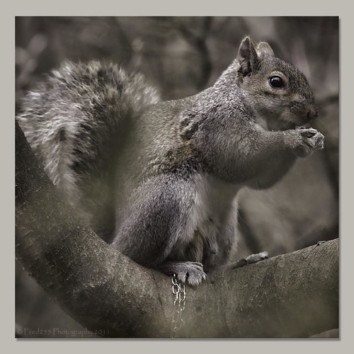 Nut Cracker | by Fred255 Photography
