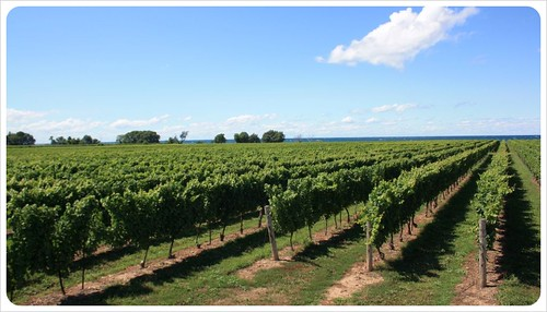 niagara wine country & lake | by globetrottergirls