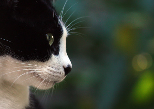 Cat profile | by Monica R.