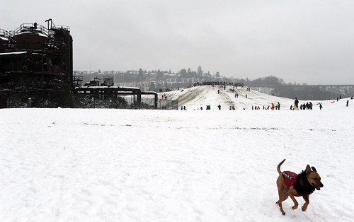 A happy leap! Rosie frolicking on the snow in her dog sweater with black fringed scarf, the big hill, Gas Works Park, Seattle, Washington, USA | by Wonderlane