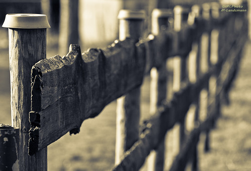 Afternoon fence | by .Markus Landsmann